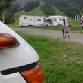 Erster Tag in Balderschwang - und schon Besuch...