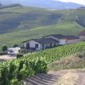 Blick auf die Umgebung des Weingutes