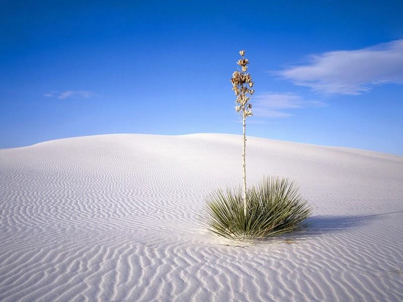 white-sands1